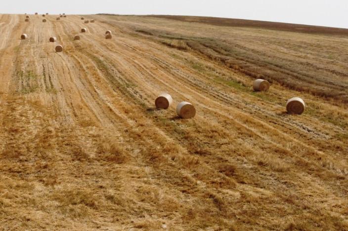 campi di fieno